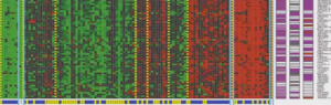 genes cluster - Edureka