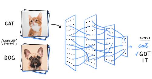 گربه در مقابل سگ - قیاس - AI در مقابل یادگیری ماشین در مقابل یادگیری عمیق